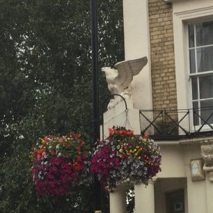 Eagle on shop at the top of St John's Wood High Street
