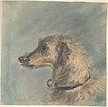 Scottish Deerhound by Maud Earl