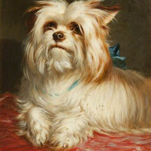 A Yorkshire Terrier  by Maud Earl  | Lytham Art Collection of Fylde Borough Council;