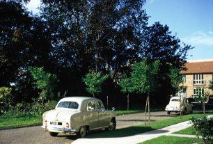 The trees and shrubs opposite the terrace 1958 | Bridget Clarke