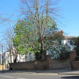 Houses next door in Blenheim Road | Bridget Clarke