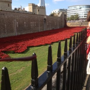 Poppies at the Tower of London 2014 | Bridget Clarke