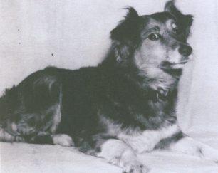 My dog Nipper | Reg Page
