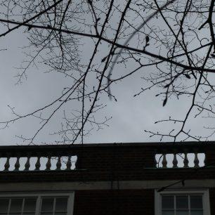 Park Lodge roofline   Louise Brodie