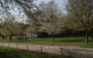 Dreamland - the Regent's Park