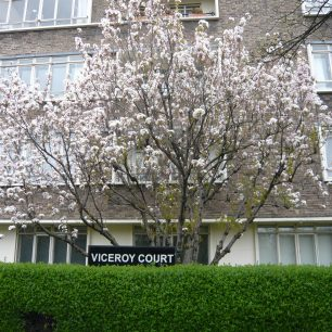 Viceroy Court | Louise Brodie